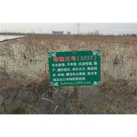 双季节藕种、汉川藕御莲藕种植场、双季节藕种采购