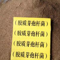 厂家直销【胶冻芽孢杆菌】改良盐碱地 提高作物产量和品质