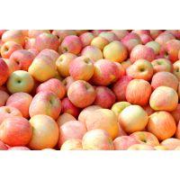 陕西红富士苹果洛川苹果优质供应价格电议