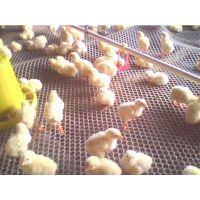 神龙架塑料平网 家用养鸡网畜牧养殖网 欢迎来电咨询18802788160