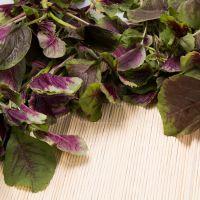 供应批发云南特产新鲜优质蔬菜天然放心苋菜减肥清身有机蔬菜