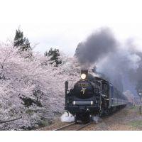 日照出口杜尚别745309铁路运输货代