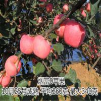 矮化M9t337自根砧 乔化砧木 甜茶砧木 烟富10号苹果树苗