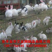 供应生产高质量兔笼 子母兔笼 无底子母兔笼 多层兔笼 养兔设备