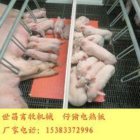 养猪设备仔猪塑料电热板怎么卖