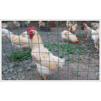 养殖铁丝网,绿色养殖铁丝网多钱一米,昌泽铁丝网生产厂家