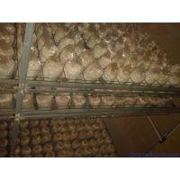 芜湖市蘑菇菌出菇电焊网片@鸿德蘑菇养殖网@绿色公路护栏网