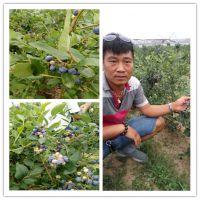 出售水果树苗 山东果树苗种植基地 鑫豪园艺场批发果树苗价格低廉