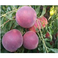 怎么能找到***正宗的蒙阴水蜜桃_桃小蒙蒙阴蜜桃有1500余亩桃树