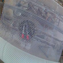 塑料网筛网 塑料平网行情 黑豚养殖笼
