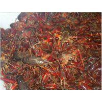 舌尖上的中国【越活草本】上海小龙虾批发价格供应