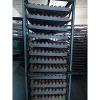 供应海兰褐蛋鸡苗,伊莎褐蛋鸡苗,江苏蛋鸡苗,河南蛋鸡苗,浙江蛋鸡苗