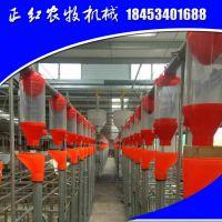 自动化养猪料线 正红农牧牌饲喂设备 zh-185自动供料