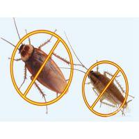 家庭灭蟑螂哪家强,家庭灭蟑螂,天下无虫
