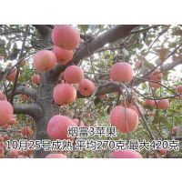 18854848777(在线咨询)、苹果苗、优质苹果苗