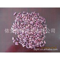大量供应紫花芸豆