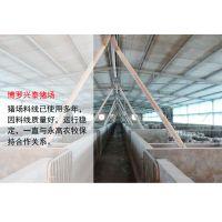 永高农牧 YG 肥猪自动供料系统 猪场专用饲喂设备 自动化养猪设备方案