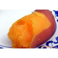 河北雄县红薯基地供应2014优质龙薯9红薯8月即可大量上市