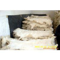 供应绵羊皮 半成品 老羊皮 剪羔皮 春羔皮
