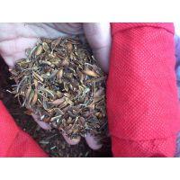 山东泰安丁香树苗种子 紫丁香树种子批发价格