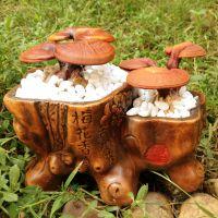 批发活体灵芝盆景 赤灵芝菌种 菌包 小型活体灵芝盆栽 可食用观赏