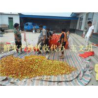 山东鲜红枣产地供应商
