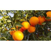 小型保鲜冷库-500吨橘子冷库安装储藏要求及优点