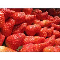 四季草莓苗 草莓苗购买地 草莓苗品种批发