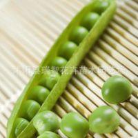 批发芽苗菜种子 白豌豆 青豌豆 芽菜种子 家庭阳台种菜 新种子
