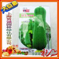 批发 蔬菜种子 好吃易种 纯丰肉丝瓜