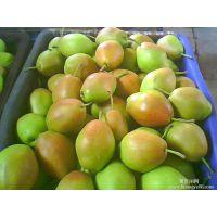 红香酥梨价格 陕西红香酥梨大量上市 价格便宜