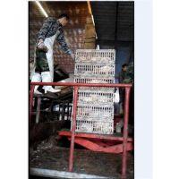德州家禽屠宰设备|信诚明顺机械|小型家禽屠宰设备