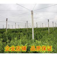 贵港哪里有皇帝柑树苗出售