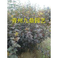 上海宿根花卉基地价格批发