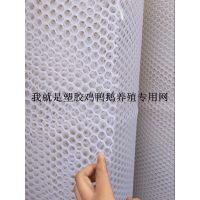安平县万恒塑料网厂@现货直销各种规格塑料平网@大小孔大小鸡养殖专用塑料网垫