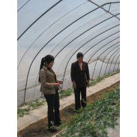供应郑州花卉温室价格简易拱棚安装技术指导大棚配件批发