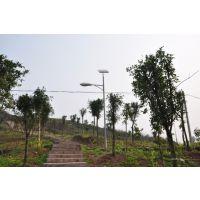 河北廊坊LED太阳能路灯 高杆灯 6m30w外形可定制 飞鸟厂家供应