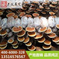 赤灵芝 孢子粉品种齐全 冠县广义灵芝厂家批发
