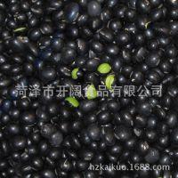 直销优质手选青仁黑豆  豆类食品 批发营养黑豆 厂价批发【图】