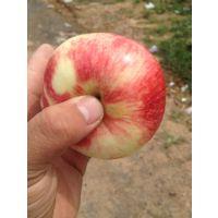 山东红将军苹果产地红将军苹果产地批发型号80-90价格1-2元1斤甜脆颜色好质优价廉