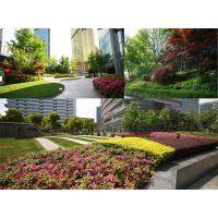 深圳园林绿化养护管理行业如何做到专业?
