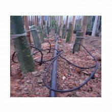 火龙果滴灌种植技术 滴灌盆栽技术 滴灌膜下技术
