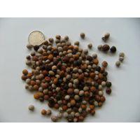 木豆种子家禽饲用可做肥保持水土改良环境花灌木种子批发