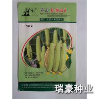 厂家直销 黄瓜种 寿光蔬菜种子 高产黄瓜 水果型黄瓜种子 袋装