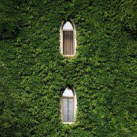 仿真植物墙绿植墙背景墙仿真草坪门头橱窗形象墙店招墙体绿化装饰优嘉工艺