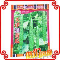 大量批发    天津8113黄瓜种子 各类蔬菜种子