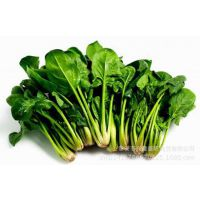 山东蔬菜种植基地 直销绿色无公害茄子 新鲜蔬菜批发 蔬菜购销