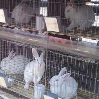 兔笼专业生产家 24位商品养殖兔子笼 多种规格可选15633528151