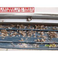 上海消灭老鼠公司|老鼠怎么防治|灭鼠用品