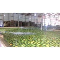 台湾水果分选机厂家|水果分选机的适用范围主要包括哪些呢